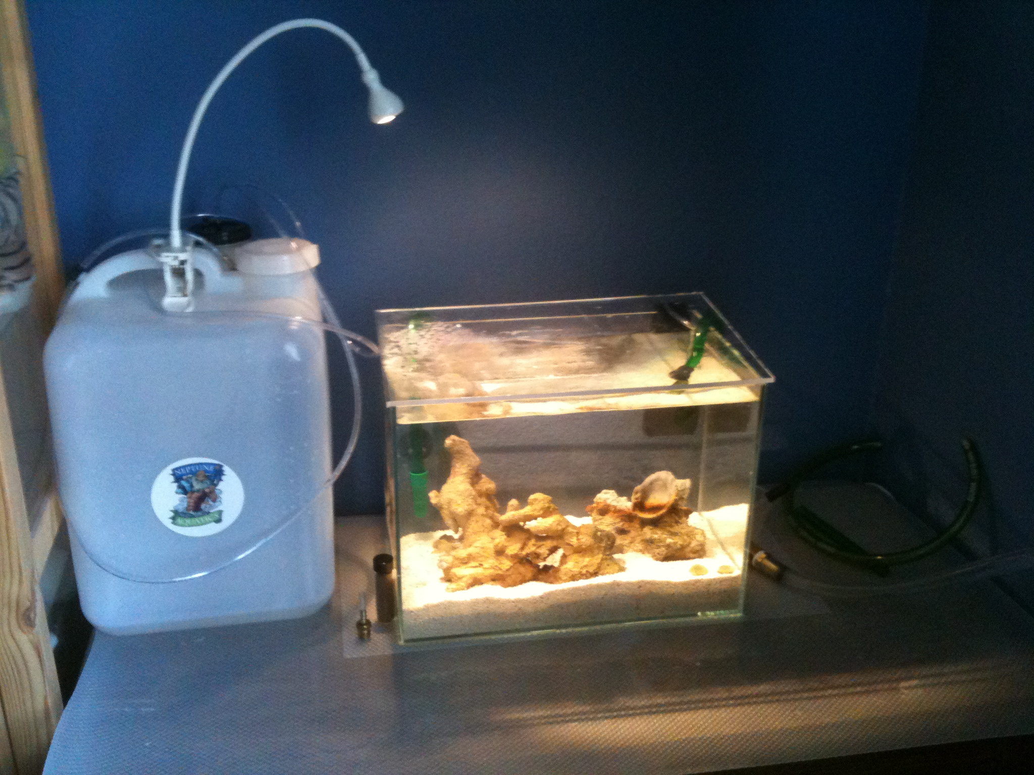 Saltwater fish tank setup for sale for Saltwater fish tank for sale
